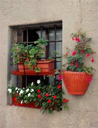 herbs and flowers growing in a window box